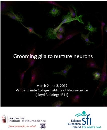 grooming-glia-image